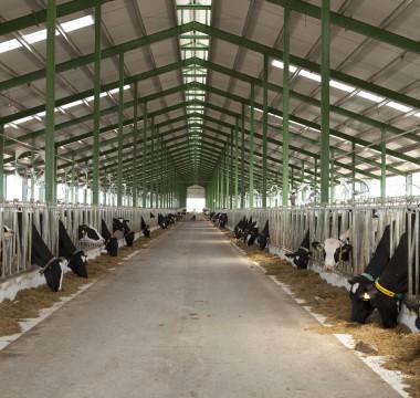 Atena  - Farm commercials